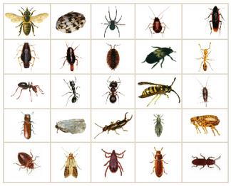 Extermination insecte fourmis charpenti re punaise de - Produit pour eliminer les punaises de lit ...